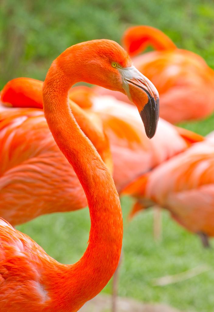 Фламинго:3