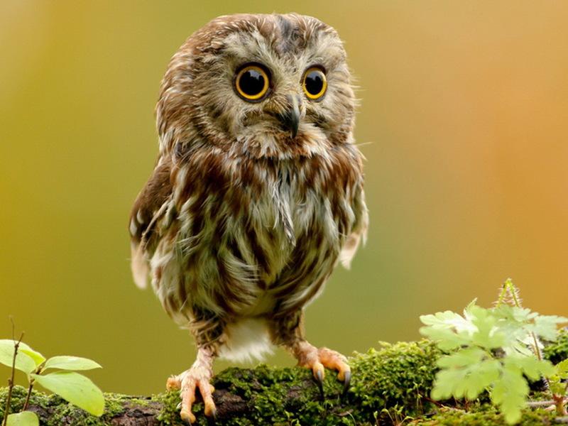 http://www.animalsglobe.ru/wp-content/uploads/2011/09/%D1%81%D0%BE%D0%B2%D0%B0.jpg