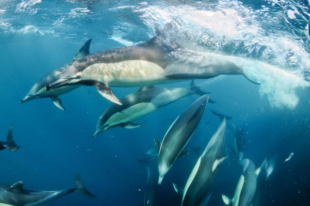 Прыжок дельфина в сексе