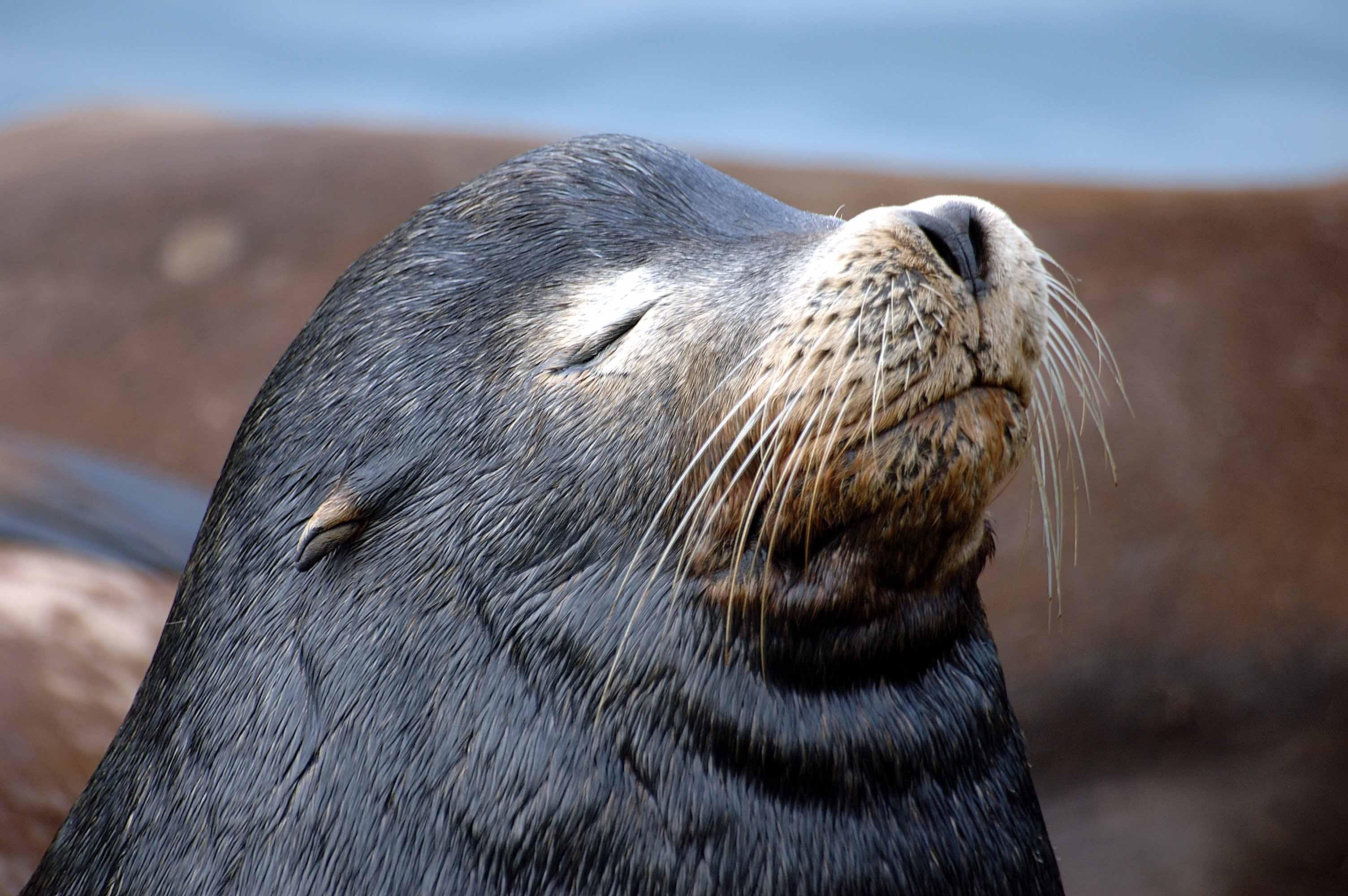 картинки морских котиков