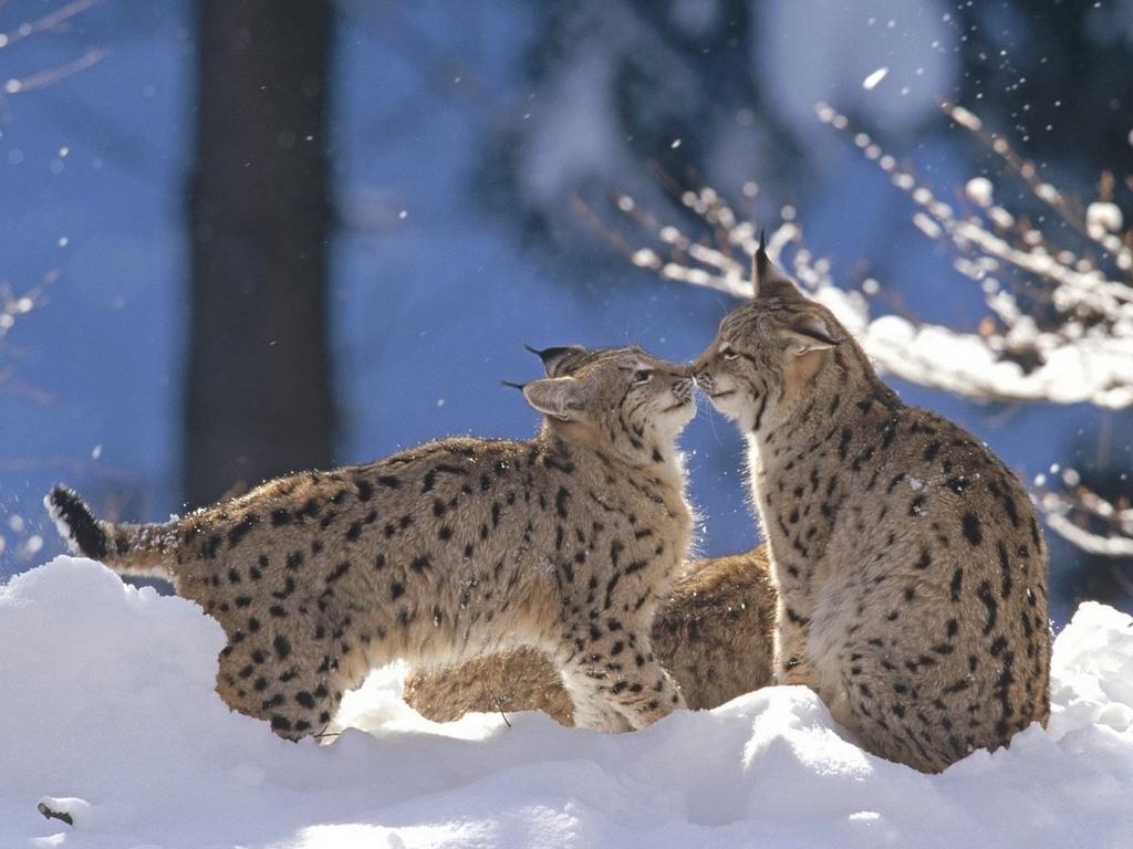 http://www.animalsglobe.ru/wp-content/uploads/2011/09/d180d18bd181d18c-3.jpg