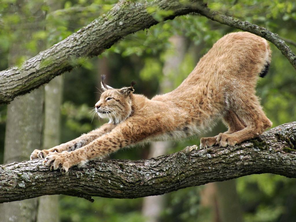 http://www.animalsglobe.ru/wp-content/uploads/2011/09/d180d18bd181d18c-7.jpg