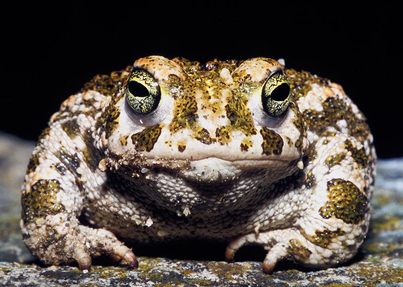 скачать игру жабы