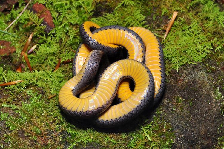 змей и их названия