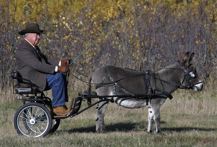 http://www.animalsglobe.ru/wp-content/uploads/2012/03/osel-10.jpg