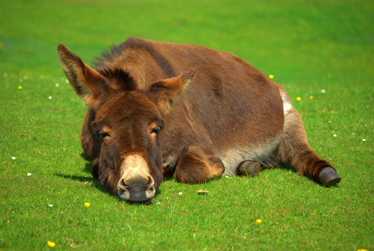 http://www.animalsglobe.ru/wp-content/uploads/2012/03/osel.jpg