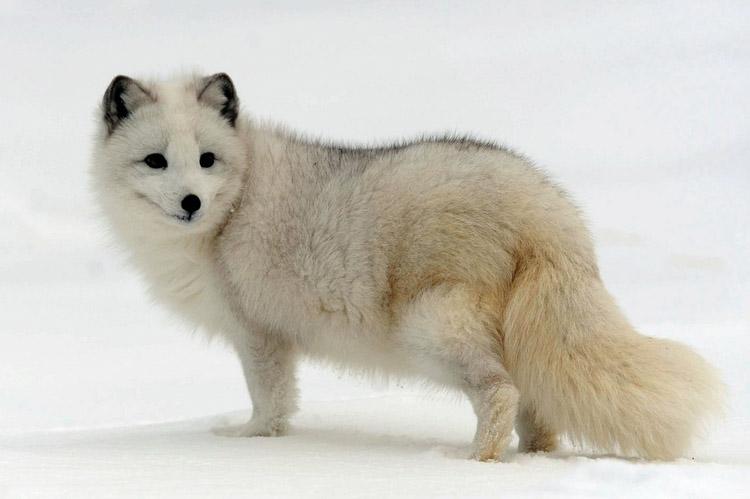 http://www.animalsglobe.ru/wp-content/uploads/2012/03/pesets.jpg