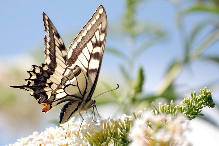 Рубрика насекомые