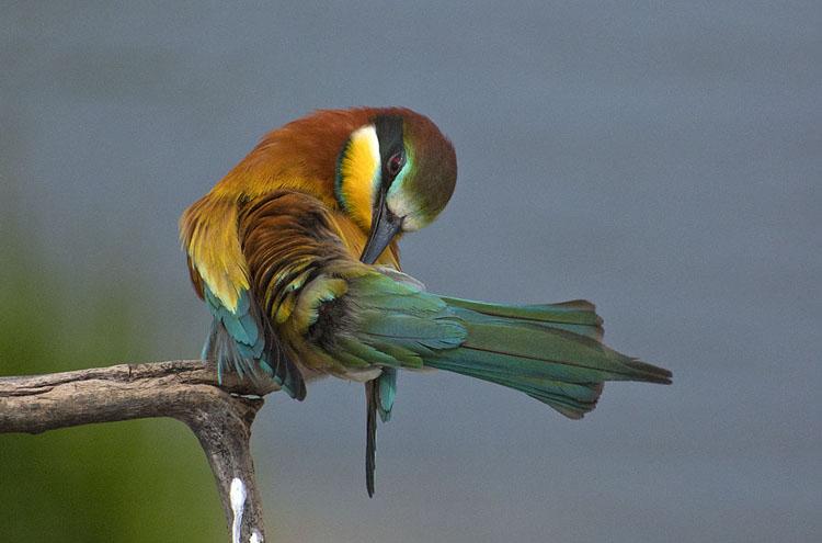 Птицы тропиков и не только источник