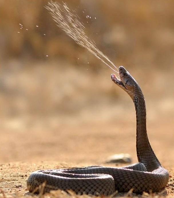 кобра скачать торрент - фото 9