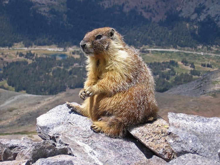 http://www.animalsglobe.ru/wp-content/uploads/2012/08/surok-41.jpg