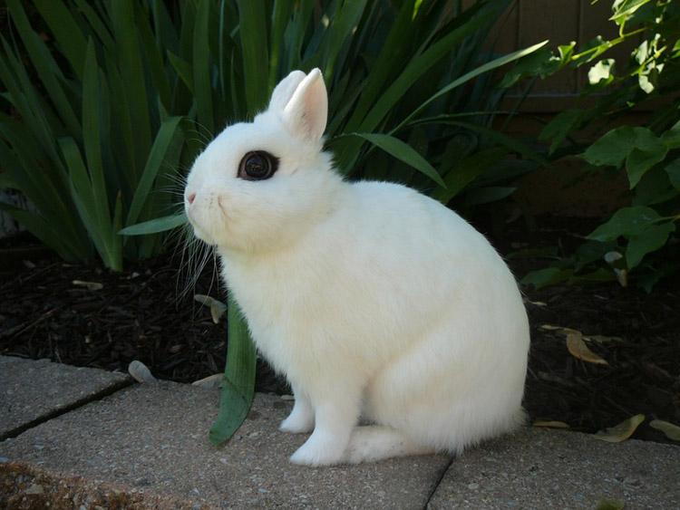 фото взрослые декоративные кролики