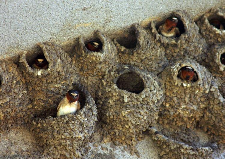 Ласточкино гнездо ✅ гостевой дом «ласточкино гнездо» находится в светлогорске, в 400 метрах от балтийского моря. К услугам гостей бесплатный wifi.