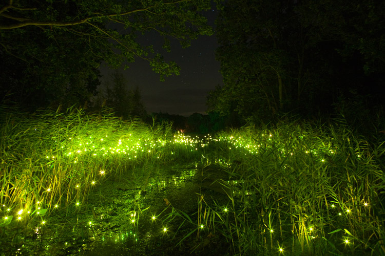 Светляки